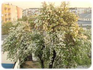 Lieber Baum (1)