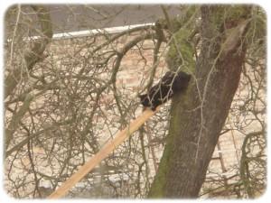 Lieber Baum (2)